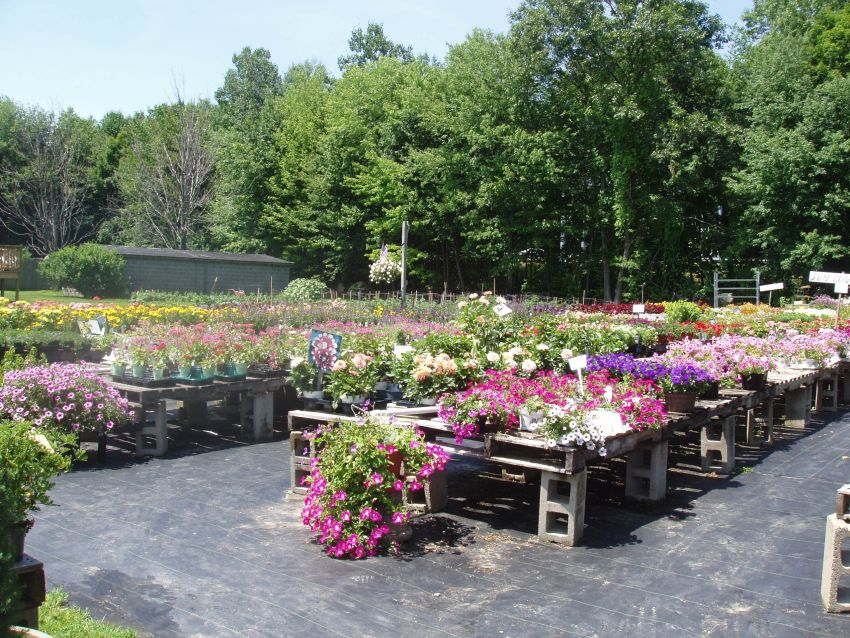 Annual flower flats at Depot Farm Stand, Garden Center, and Gift Shop, Merrimack, NH